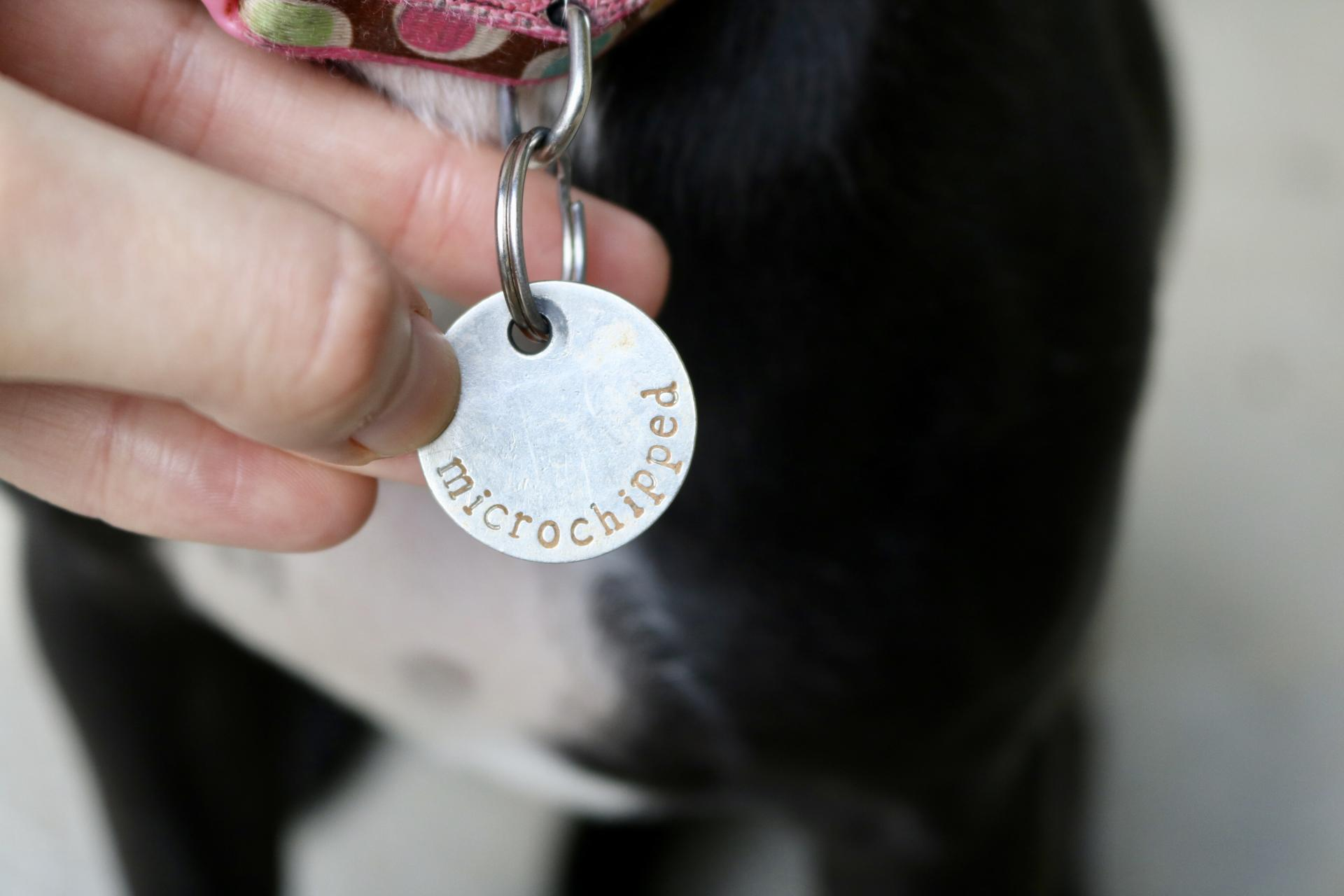 Five Dog Accessories to Make Your Life Easier   Katie Actually