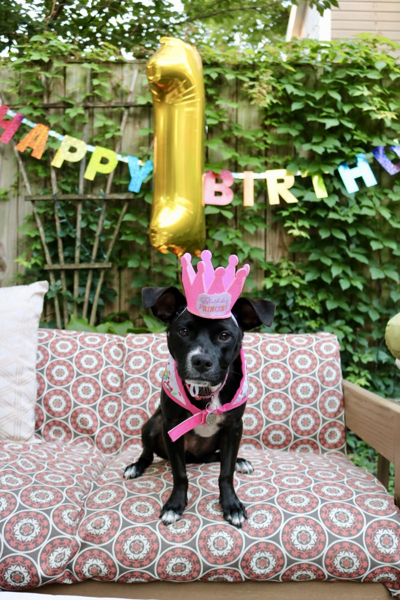Puppy Birthday Party! Celebrating Luna with Cake Batter Puppy Chow   Katie Actually