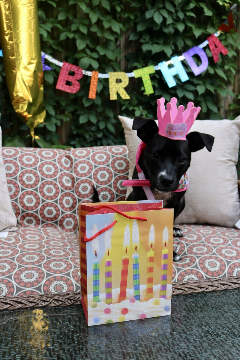 Puppy Birthday Party! Celebrating Luna with Cake Batter Puppy Chow | Katie Actually